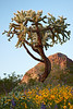 Arizona : 3 galleries with 760 photos